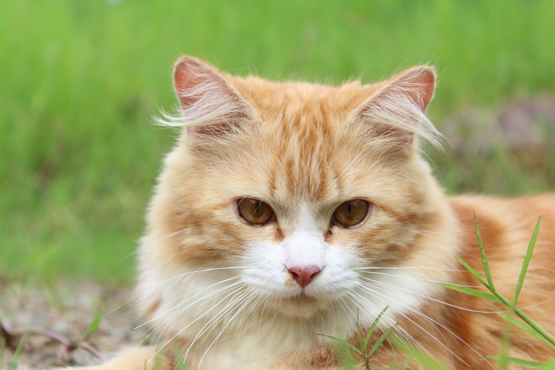 cat-feline-kitty-kitten-39380